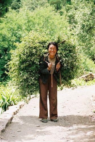 Zdjęcia: w poblizu lodowca, Zielono mi, CHINY