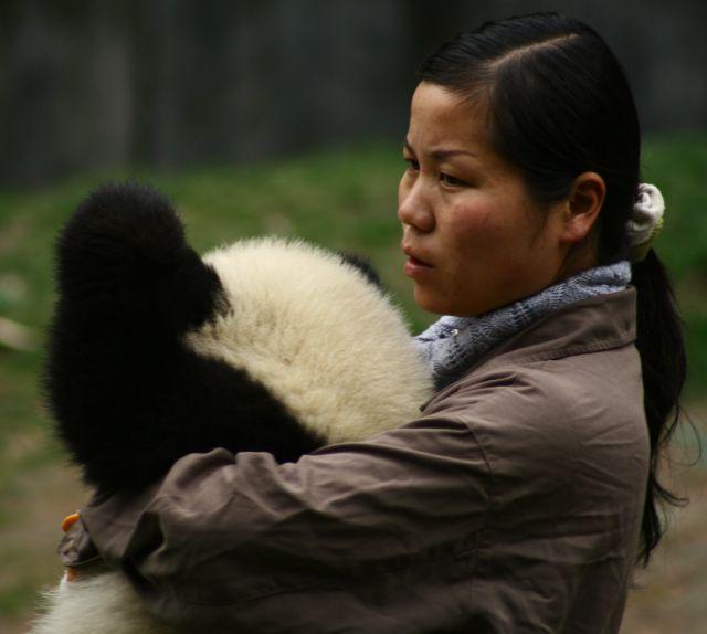 Zdjęcia: wolong nature reserve, opiekunka, CHINY