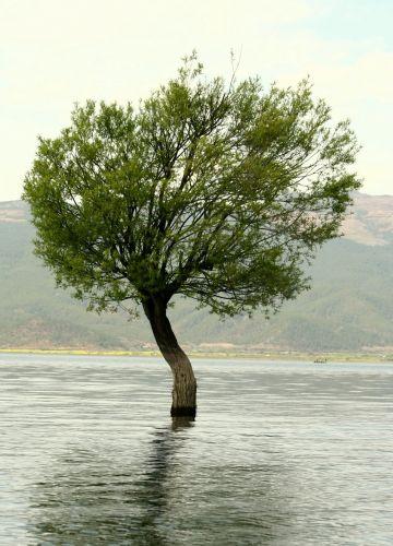 Zdjęcia: lijigan, drzewo..., CHINY