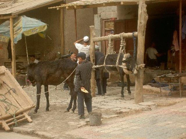 Zdjęcia: Kaszgar, Kaszgar, Podkuwanie osiolka, CHINY