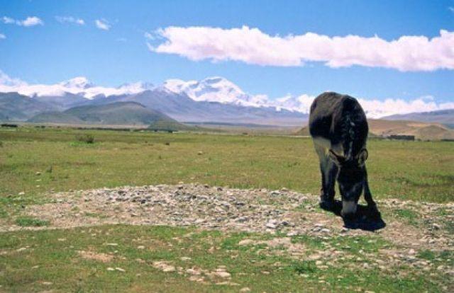 Zdjęcia: Xigace, Tybet, Cho Oyu, CHINY