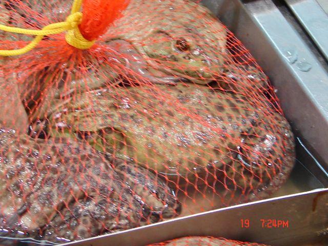Zdjęcia: Nanning, Guanzou, Chiny ,zabki zywe w chinskim supermarkecie, CHINY