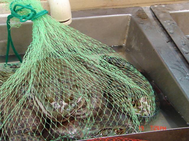 Zdjęcia: Nanning, Guanzou, Chiny ,zabki w chinskim supermarkecie  2, CHINY