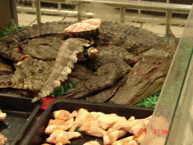 Zdjęcia: Nanning, Chiny , chiny,krokodyle w supermarkecie, CHINY