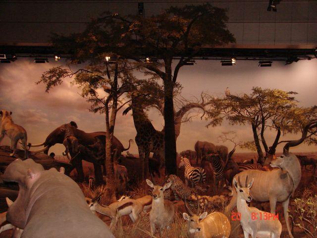 Zdjęcia: Pudong, Szanghaj , Zwierzeta wypchane--Muzeum Techniki, CHINY