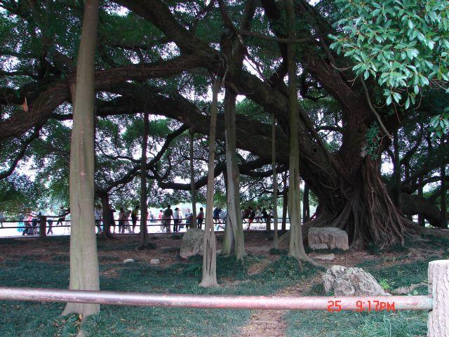 Zdjęcia: Guilin, Guangzo, Baobab , wstep 1 yen, CHINY