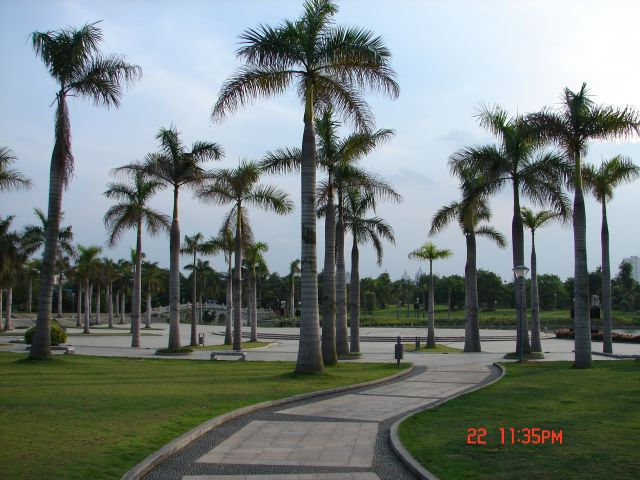 Zdjęcia: Nanning, Guangzo, Chinskie palmy, CHINY