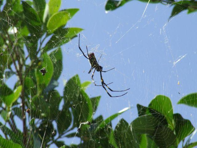 Zdjęcia: Dali, Prowincja Yunnan, Mały pajączek, CHINY