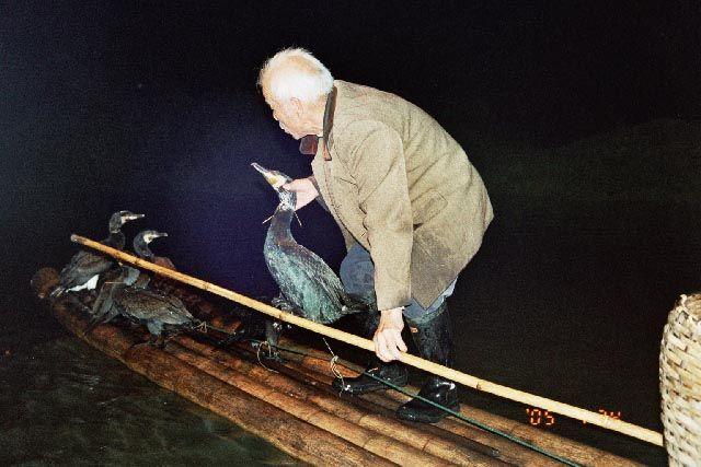 Zdjęcia: Jangshuo, Guangxi, połów z kormoranami, CHINY