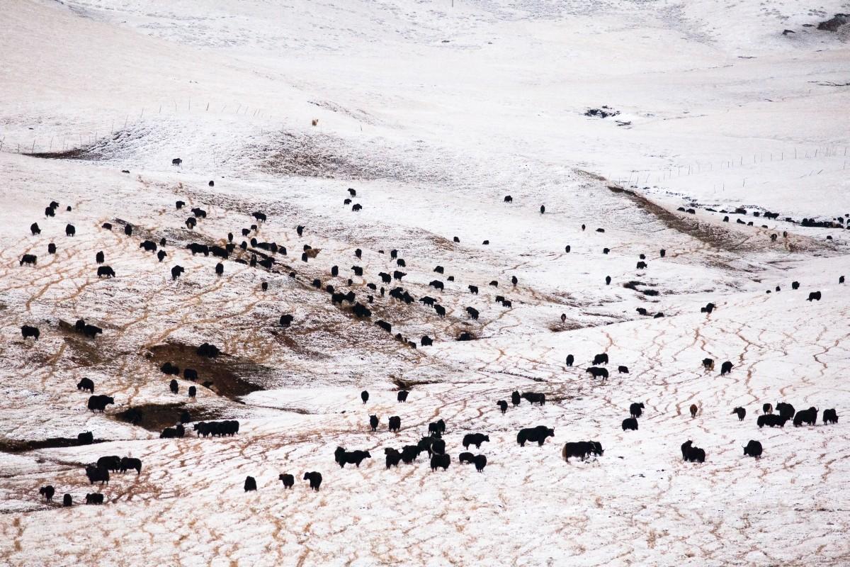 Zdjęcia: okolice Langmusi, Syczuan, Czarno na białym, CHINY
