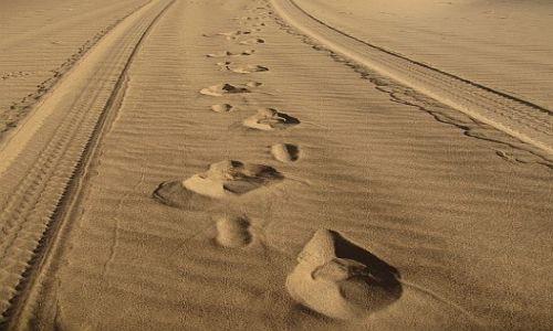 Zdjęcie CHINY / Badain Jaran / pustynia / Życie na pustyni jednak się toczy
