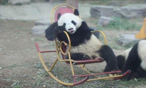 Zdjecie CHINY / Pekin / pekińskie zoo / najmilej czas spędza się na bujanym fotelu