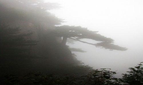 CHINY / prowincja Anhui / Huang Shan / Sosna Powitalna we mgle