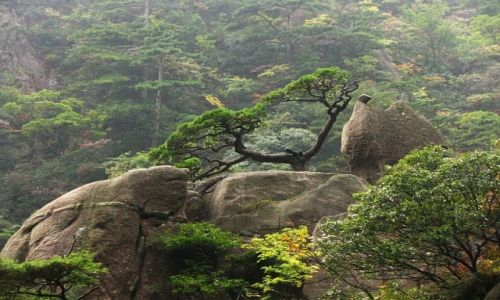 CHINY / prowincja Anhui / Huang Shan / Góry Żółte