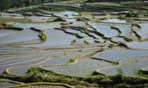 CHINY / Yunnan / okolice Xinjie / A propos pól ryżowych