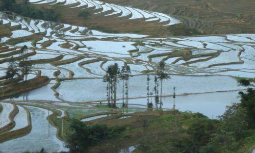 CHINY / Yunnan / okolice Xinjie / Tarasy ryżowe Bada (2)
