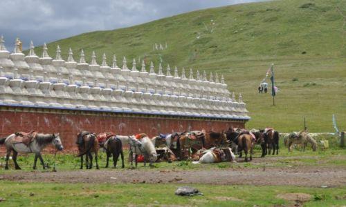 Zdjęcie CHINY / Garze / Tagongxiang / Mur Tagong Temple