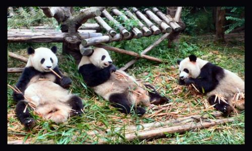 Zdjecie CHINY / Syczuan / Chengdu / Śniadanie