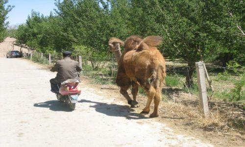 Zdjęcie CHINY / Gansu / Mingshashan / Droga do pracy