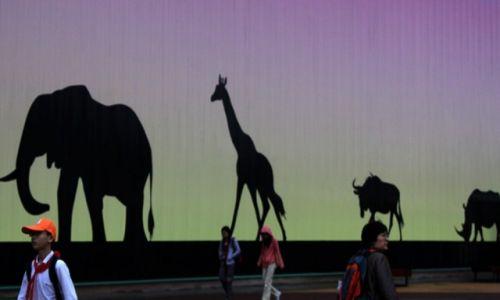 Zdjęcie CHINY / Shanghai / Shanghai / Shanghai - Expo 2010