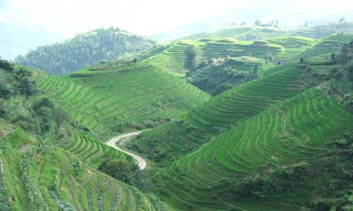 Zdjecie CHINY / brak / Tarasowe pola ryżowe Longji Titan / Tarasowe pola ryżowe