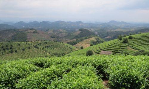Zdjecie CHINY / Guilin / Yangshuo / Herbaciane pola Yanghsuo