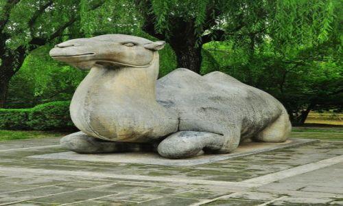 Zdjecie CHINY / Pekin / prawie w Pekinie / Wielbłąd