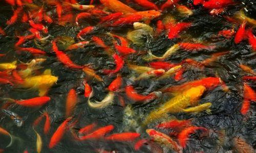 Zdjecie CHINY / Szanghai / Szanghai / Wszystkie rybki śpią w jeziorze
