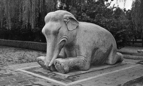 Zdjecie CHINY / Beijing / Beijing-Droga Duchów / Chyba słoń...