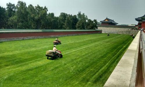 CHINY / Pekin / Pekin / Szanuj zieleń