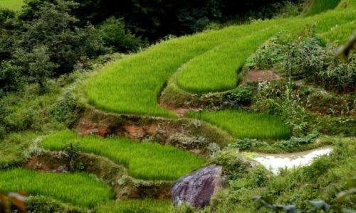 Zdjecie CHINY / Yunnan / Xinjie / Tarasy ry�owe -