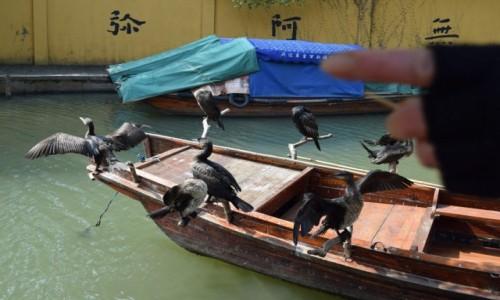Zdjecie CHINY / Szanghaj / Zhouzhuang / Z paluchem-focisz płać!!!