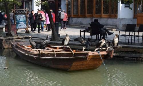 Zdjęcie CHINY / Szanghaj / Zhouzhuang / W oczekiwaniu na fotki:)