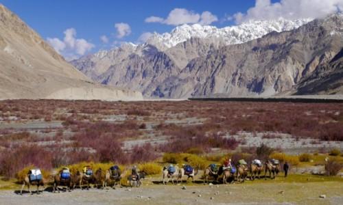 Zdjęcie CHINY / Karakorum / Shakskam - K2 / Chinese Base Camp