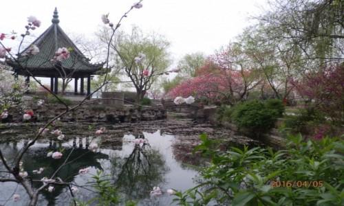 Zdjecie CHINY / Wuxi / Wuxi Li / Chińskie ogrody