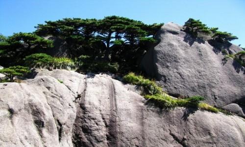 Zdjecie CHINY / prowincja Anhui / Huang Shan / sosny i skały
