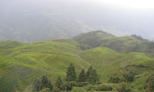 Zdjecie CHINY / brak / Longji okolice Guilin / Tarasy ryżowe L