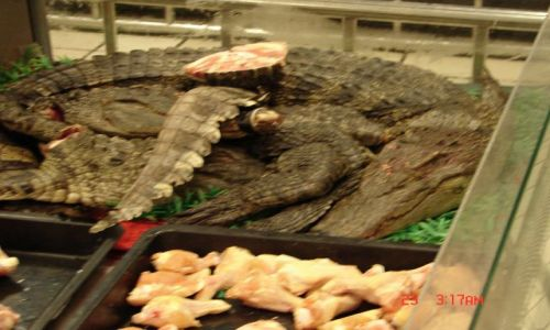 Zdjecie CHINY / Chiny  / Nanning / chiny,krokodyle w supermarkecie