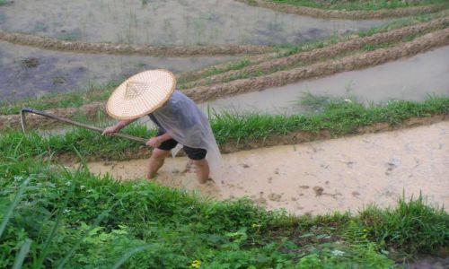 Zdjecie CHINY / południe Chin / na północ od Yangshuo / uprawa ryżu