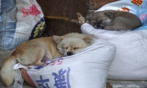 Zdjecie CHINY / Prowincja Yunnan / Wąwóz Skaczącego Tygrysa / Mieszkancy Guest House-u