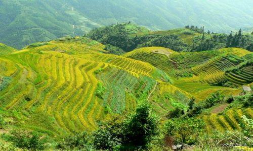 CHINY / brak / tarasy ryżowe Grzbietu Smoka / Chiny tarasy ryżowe Grzbietu Smoka