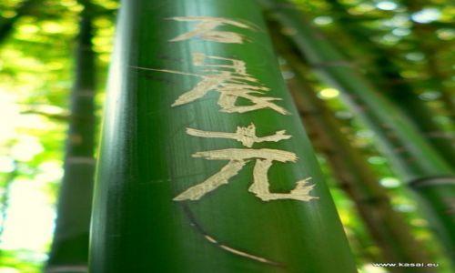 Zdjęcie CHINY / brak / Klasztor Shaolin / Chiny Shaolin bambus