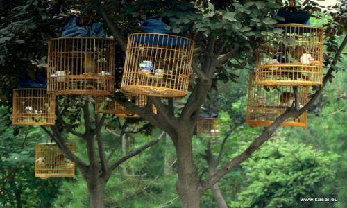 CHINY / brak / Xian / Chiny Xian ptaszki w parku