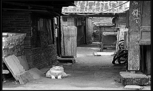 Zdjecie CHINY / brak / Pekin / jestem kotem