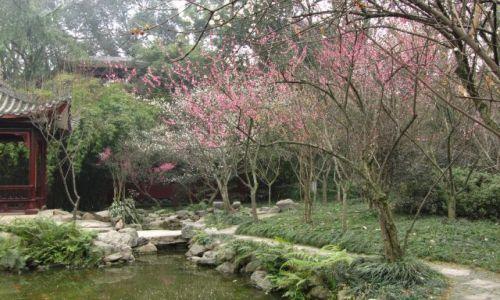 Zdjecie CHINY / Syczuan / Leshan park / KONKURS