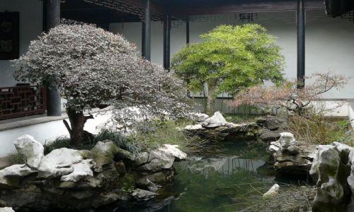 Zdjecie CHINY / Suzhou / ogrod / ogrody Suzhou