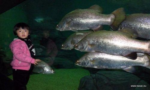CHINY / - / Szanghaj / Szanghaj - oceanarium