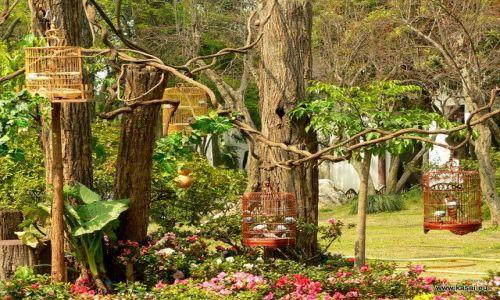 CHINY / - / Suzhou Ogród Pokornego Zarządcy / Suzhou ogród i ptaszki
