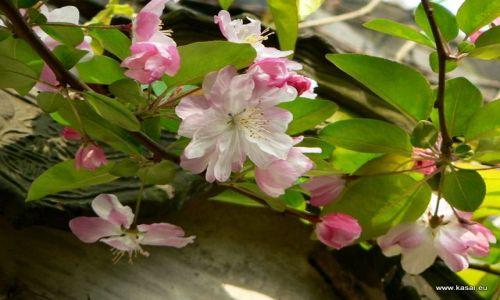 Zdjecie CHINY / - / Suzhou Ogród Pokornego Zarządcy / Suzhou ogród