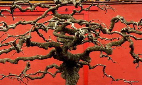 CHINY / - / Zakazane Miasto / Pekin - ogród cesarski